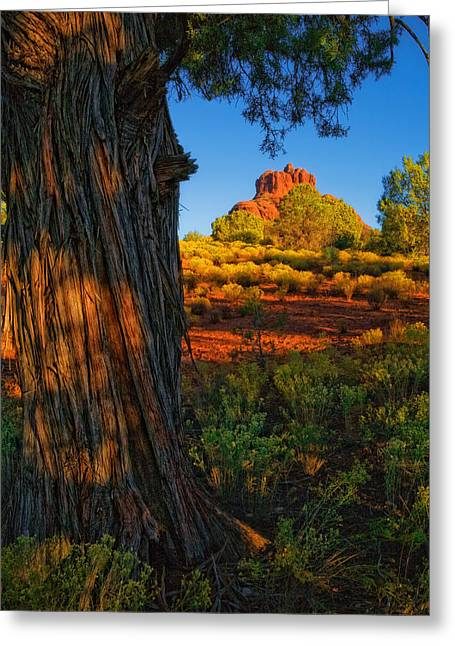 Cypress With Bell Rock Greeting Card