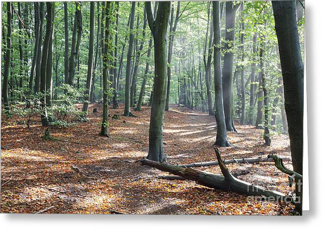 Czech Forest Greeting Card by Julie Woodhouse
