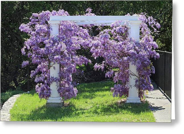 D6b6373 Wisteria In Bloom Greeting Card