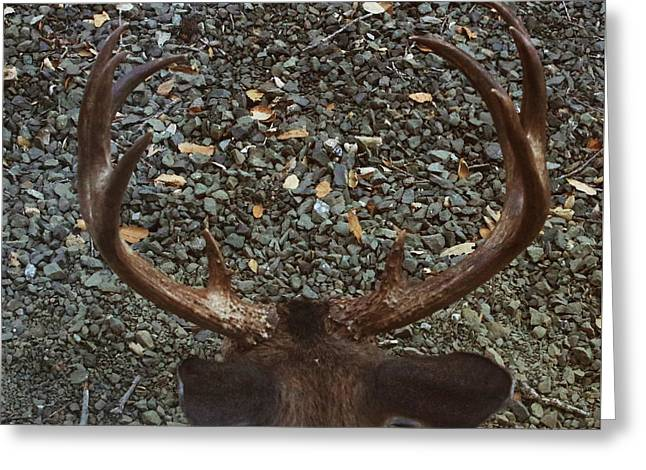 Greeting Card featuring the photograph D8b6352 8 Point Buck Sonoma Ca by Ed Cooper Photography