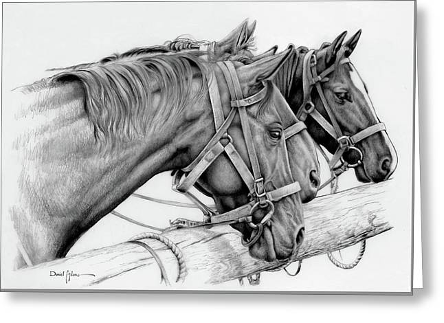 Da158 3 Horses Daniel Adams  Greeting Card
