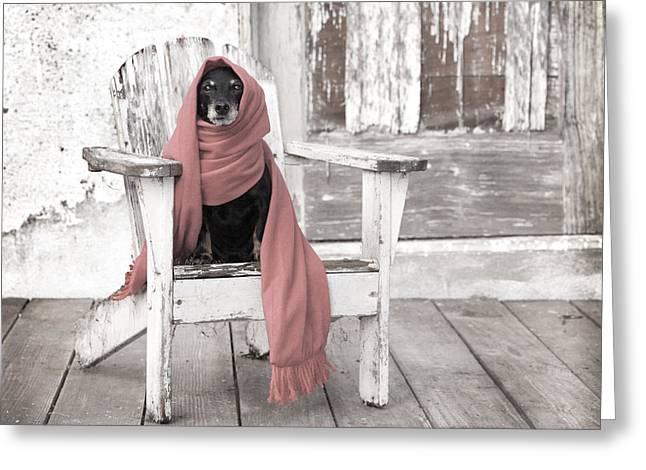 Dachshund  Dog Wearing Scarf Sitting On Adirondack Chair Greeting Card