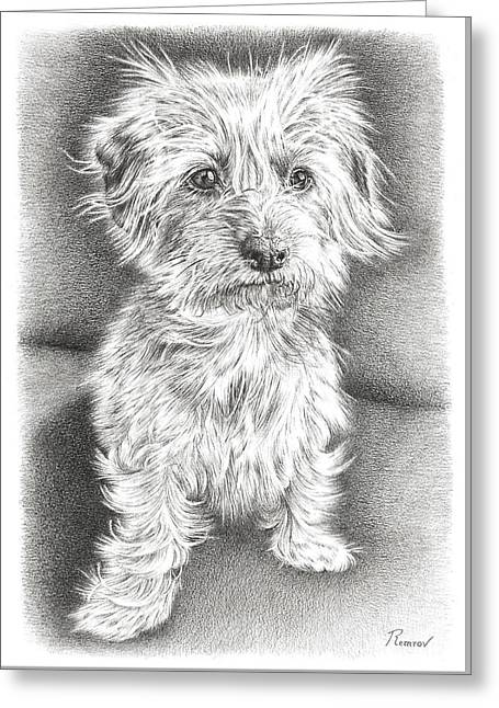 Dachshund Maltese Greeting Card