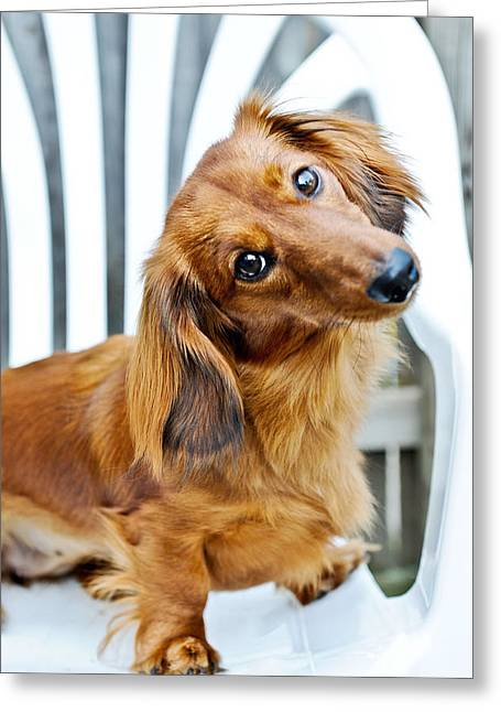 Dachshund Tilt Greeting Card
