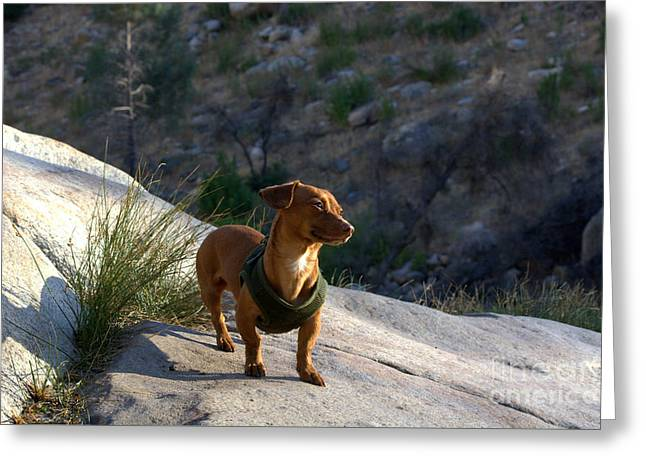 Dachshund's Delight Greeting Card