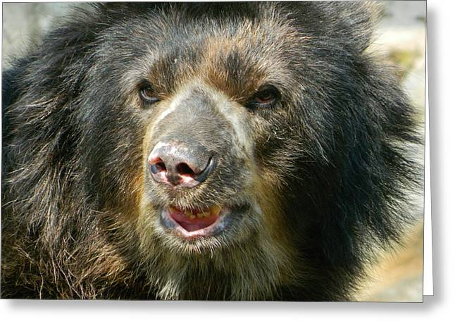 Daddy Cisco The Andean Bear Greeting Card by Emmy Marie Vickers