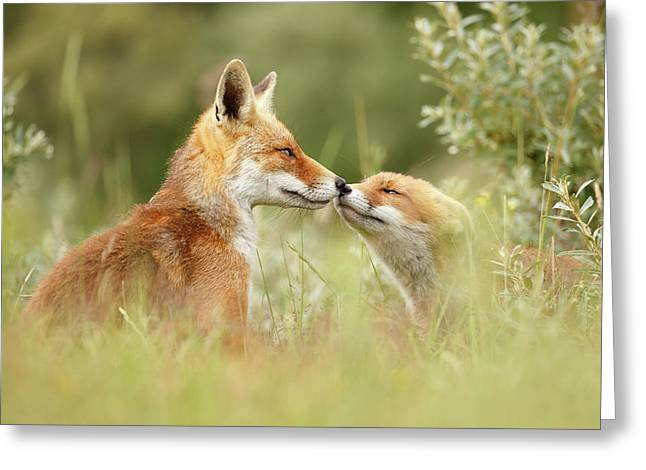 Daddy's Girl - Red Fox Father And Its Young Fox Kit Greeting Card by Roeselien Raimond