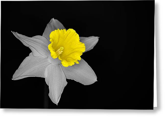 Daffo The Dilly Isolation Greeting Card