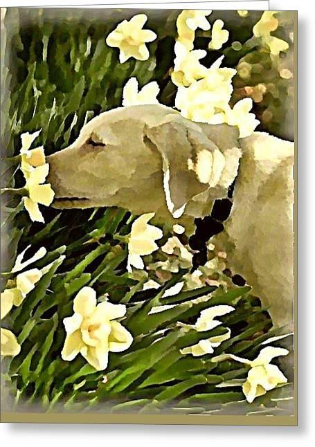 Daffodil Dog Greeting Card