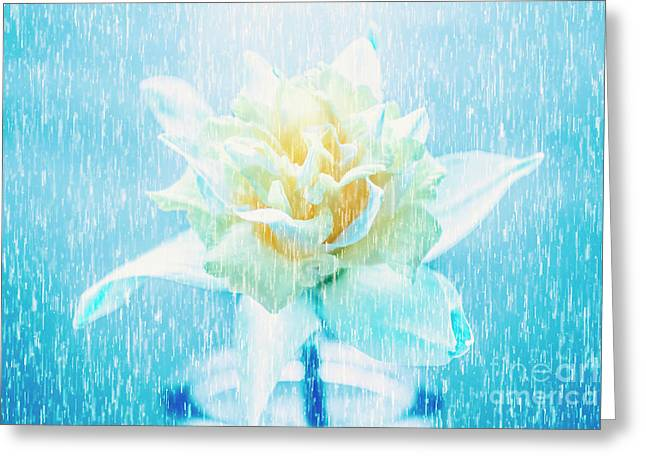 Daffodil Flower In Rain. Digital Art Greeting Card