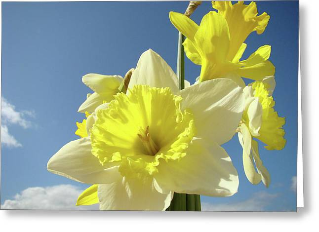 Daffodil Flowers Artwork Floral Photography Spring Flower Art Prints Greeting Card by Baslee Troutman