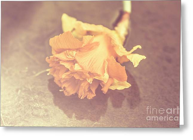 Daffodil Reflections  Greeting Card by Jorgo Photography - Wall Art Gallery
