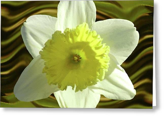 Daffodil Swirl Greeting Card