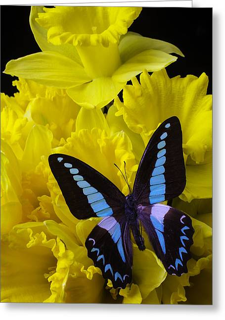 Daffodil With Blue Black Butterfly Greeting Card by Garry Gay