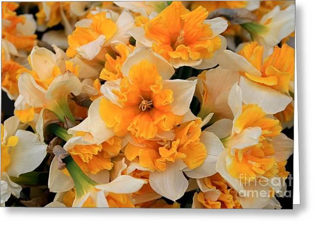 Daffodils Carpet Greeting Card by Valia Bradshaw