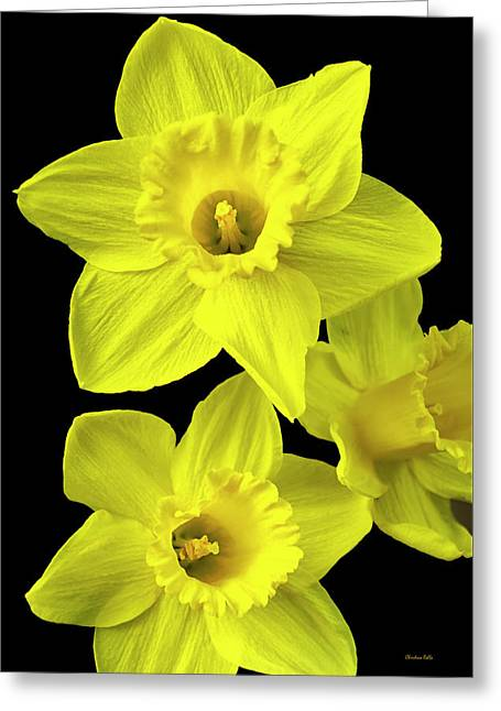 Greeting Card featuring the photograph Daffodils by Christina Rollo