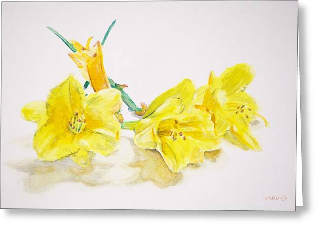 Daffodils Greeting Card by Christopher Reid