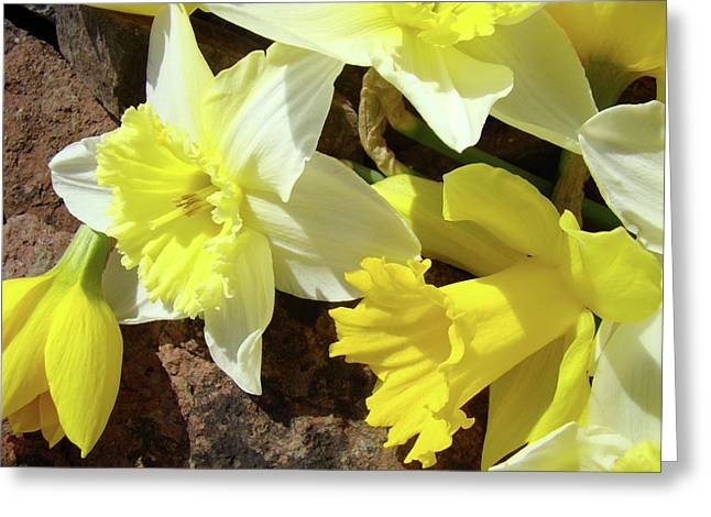 Daffodils Flower Bouquet Rustic Rock Art Daffodil Flowers Artwork Spring Floral Art Greeting Card by Baslee Troutman