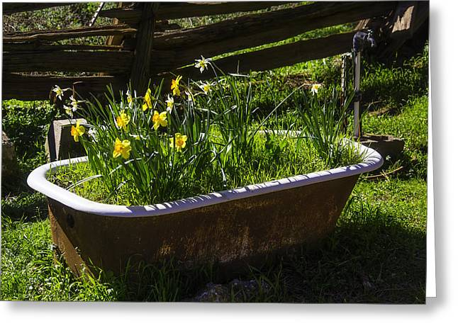 Daffodils In Bath Tub Greeting Card