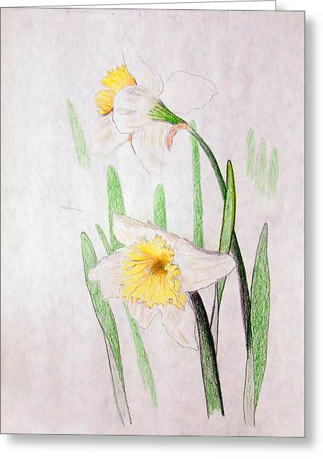 Daffodils Greeting Card by J R Seymour