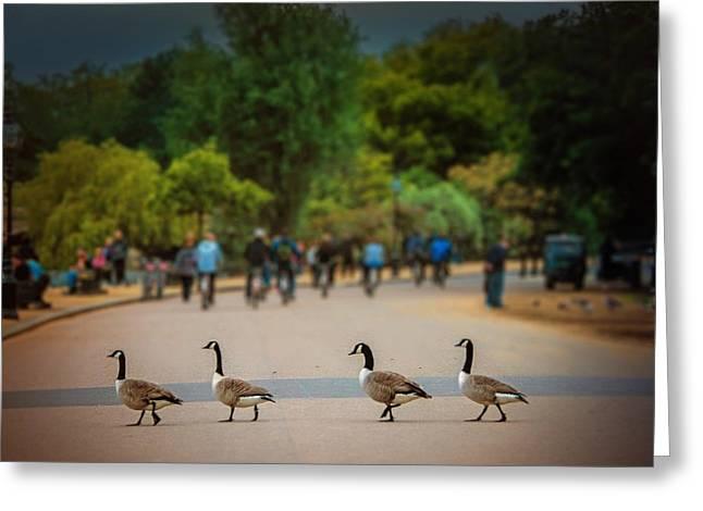 Daffy Road Greeting Card