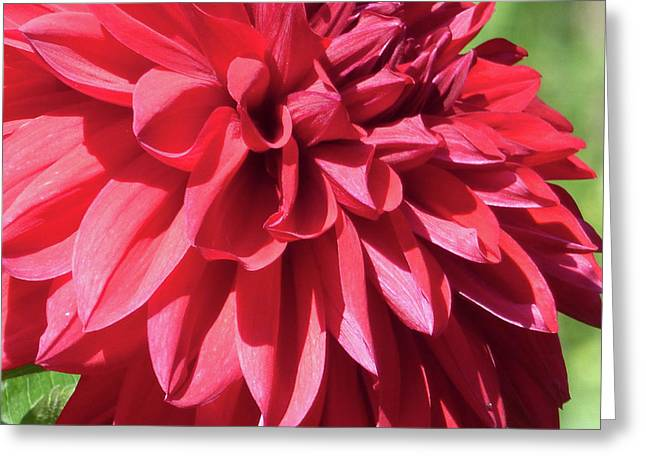 Dahlia 2016 3 0f 5 Greeting Card