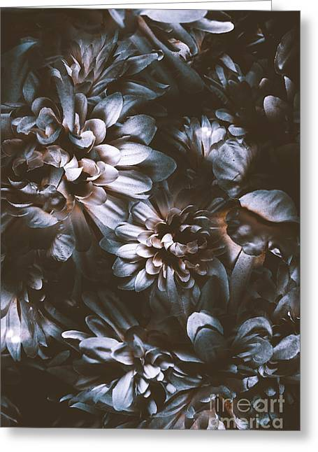Dahlia Abstraction Greeting Card by Jorgo Photography - Wall Art Gallery