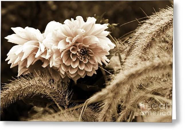 Dahlia After A Shower Greeting Card by Marcia Lee Jones