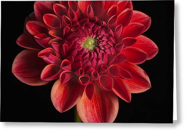 Dahlia 'all That Jazz' Greeting Card