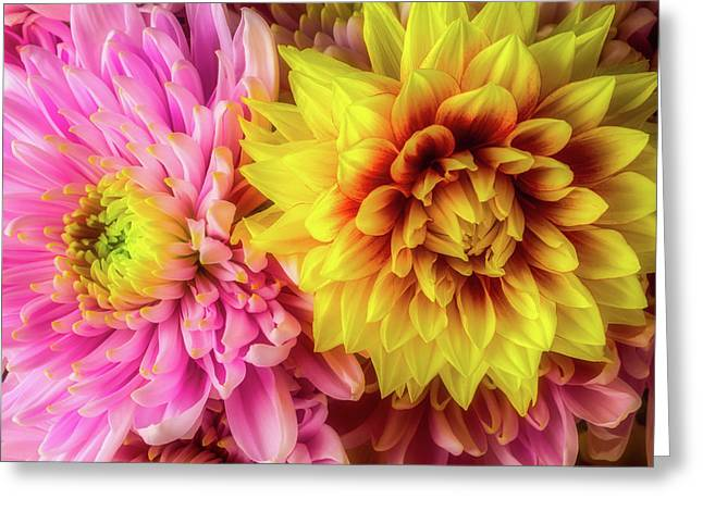 Dahlia And Mum Greeting Card