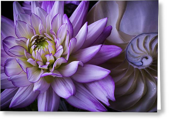 Dahlia And Nautilus Shell Greeting Card