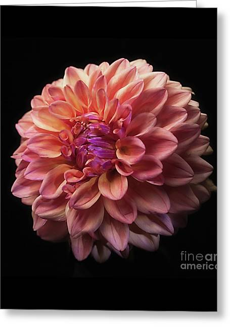 Dahlia 'ferncliff Copper' Greeting Card