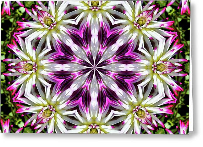 Dahlia Flower Circle Greeting Card