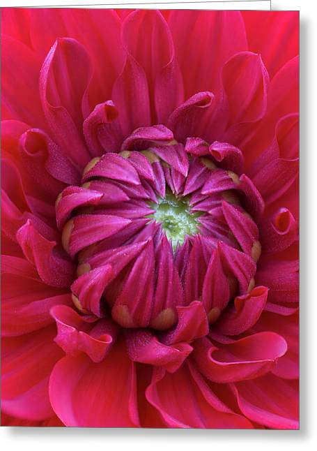 Dahlia Heart Greeting Card