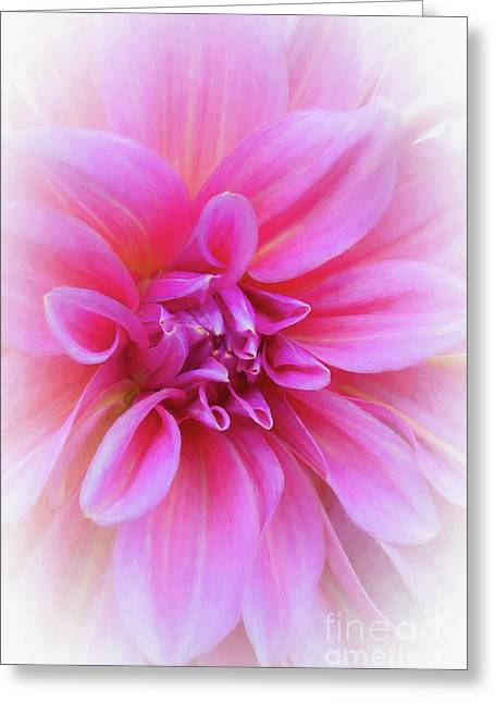 Greeting Card featuring the photograph Dahlia In Pink by Brenda Tharp