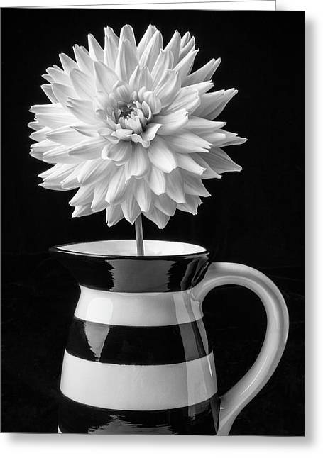 Dahlia In Pitcher Greeting Card by Garry Gay