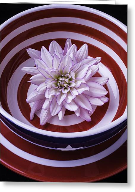Dahlia In Red And White Bowl Greeting Card