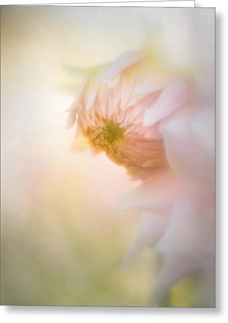 Dahlia In The Soft Morning Mist Greeting Card