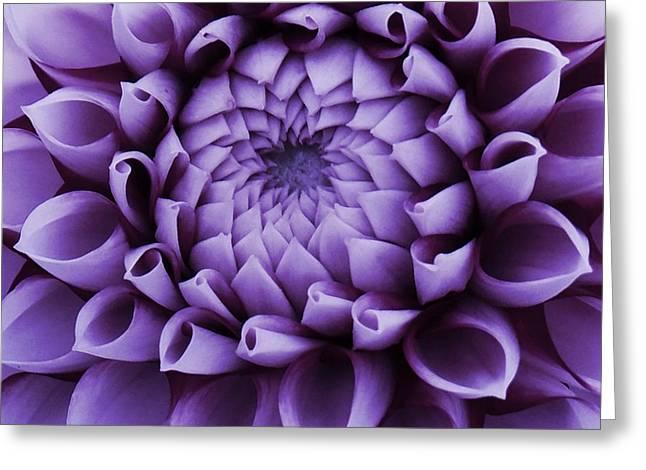 Dahlia Macro In Lavender Greeting Card
