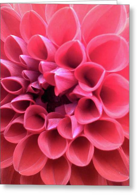 Greeting Card featuring the photograph Dahlia by Melinda Blackman