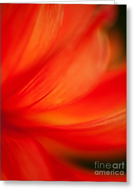 Dahlia On Fire Greeting Card by Mike Reid