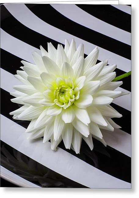 Dahlia On Striped Plate Greeting Card by Garry Gay