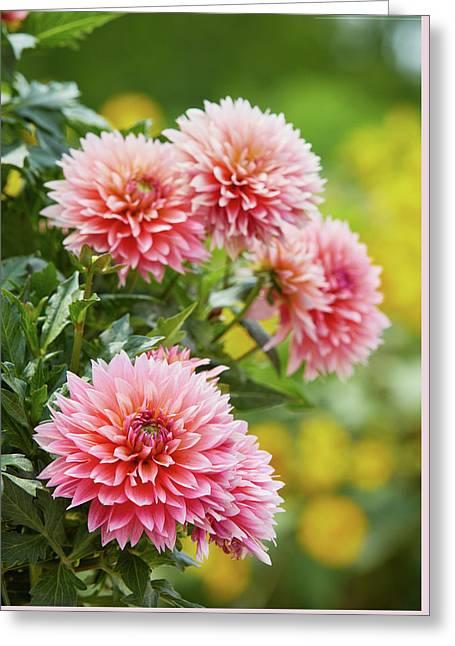 Dahlia Passion Fruit Greeting Card
