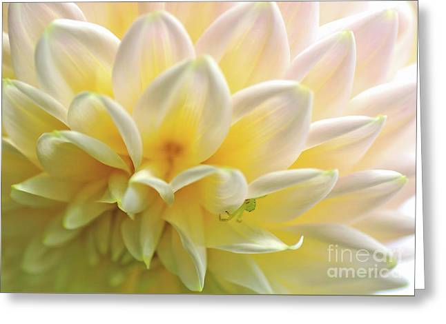 Dahlia Patterns By Kaye Menner Greeting Card