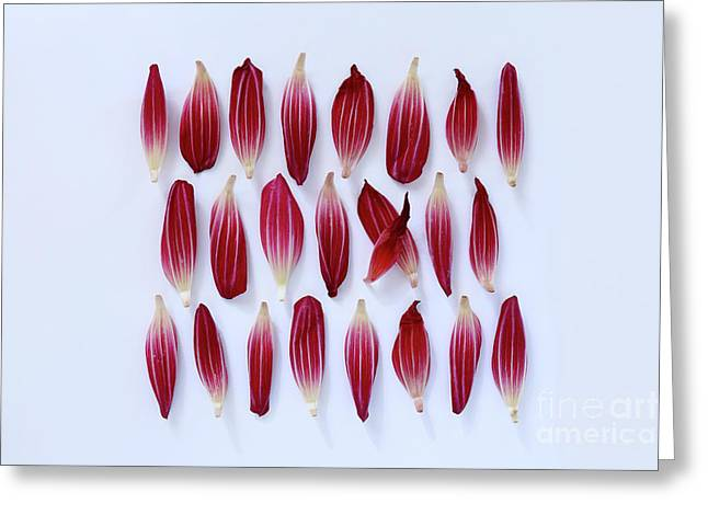 Dahlia Petals Greeting Card