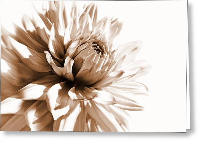 Sepia Flowers Greeting Cards - Dahlia Sepial Flower Greeting Card by Jennie Marie Schell
