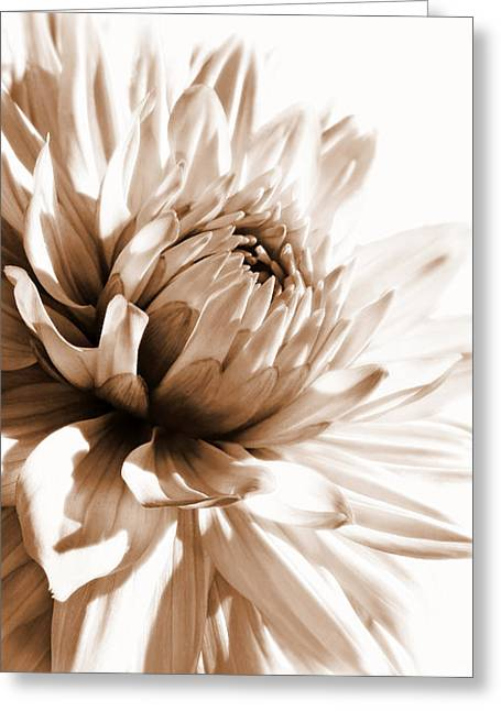 Dahlia Sepial Flower Greeting Card by Jennie Marie Schell