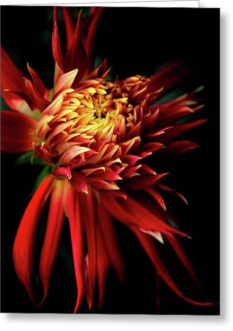 Dahlia Show And Tell Greeting Card