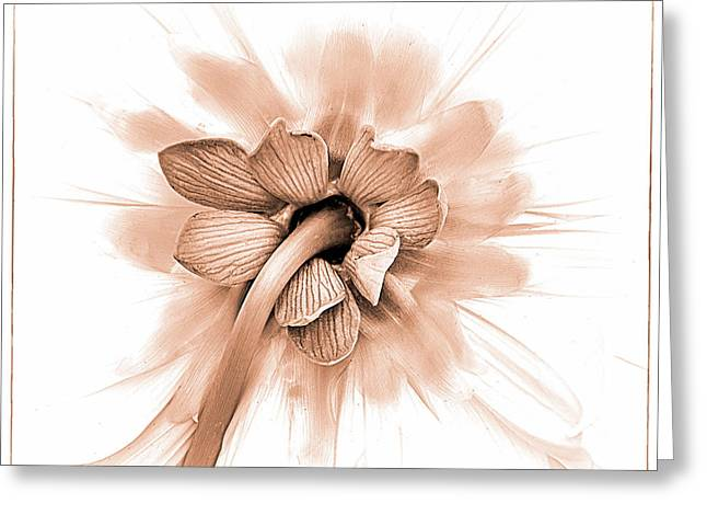 Greeting Card featuring the photograph Dahlia Shyness by Julie Palencia