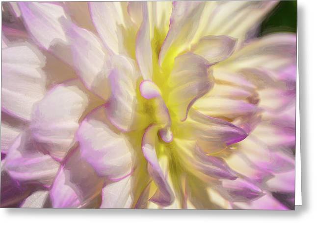 Dahlia Study 5 Painterly  Greeting Card